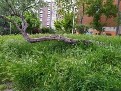 jardin_VCortijo_hierbaAlta